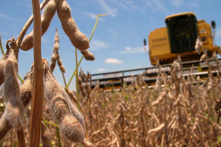 Análisis. Saldos a favor o saldos a pagar en el IVA en el sector agropecuario