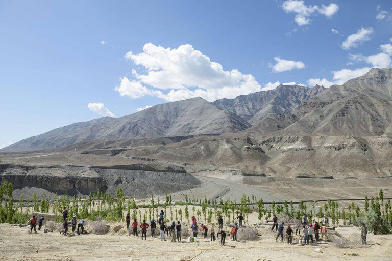 Plantación de árboles en Ladakh, abastecida por el sistema de riego proveniente de las estupas de hielo (Rolex)