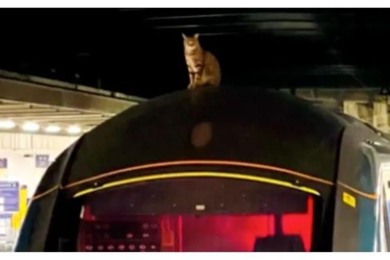 Un gato interrumpió la partida de un tren en Londres y los pasajeros tuvieron que esperar tres horas