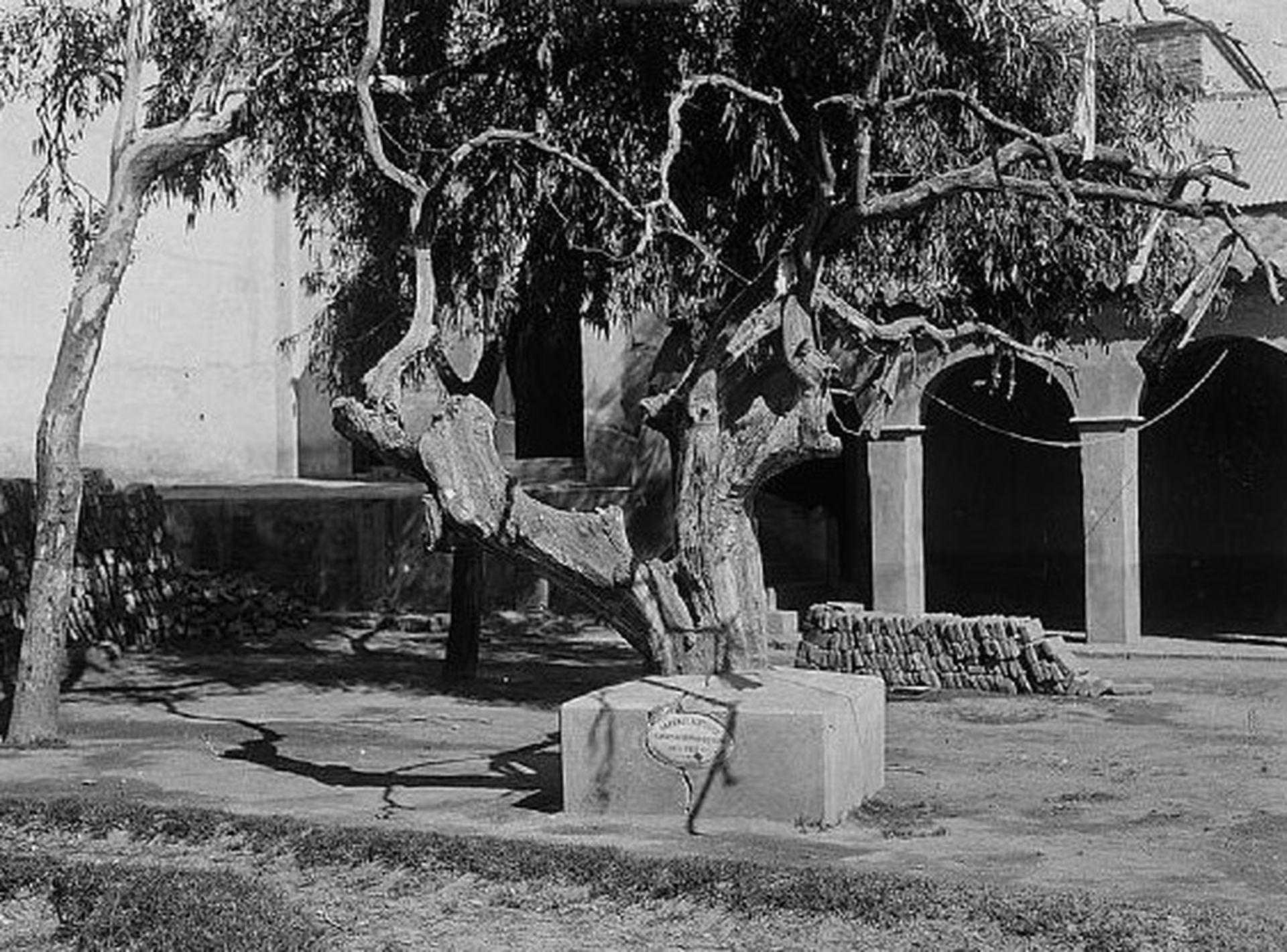 Alrededor de 1935 el  naranjo de San Francisco Solano lucía así en el jardín del convento.  Fuente: Archivo Histórico de la provincia de San Luis.
