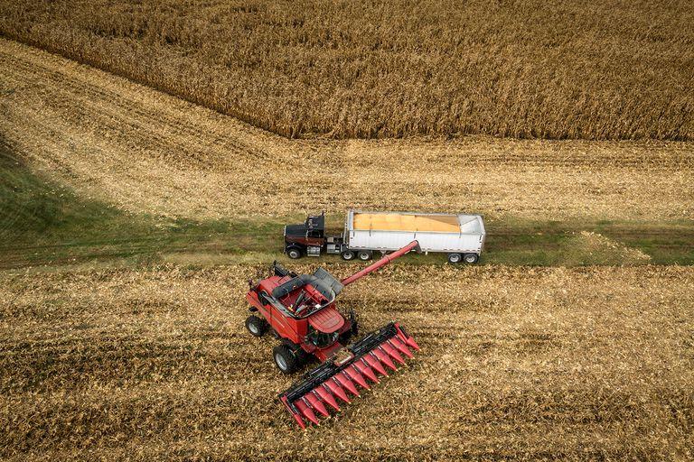 El maíz, en el centro de la polémica por la medida del Gobierno