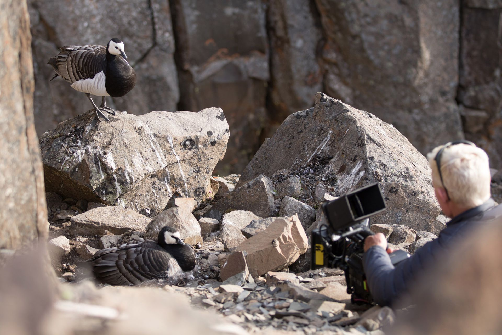 Más de 1.300 días de filmación y un equipo técnico de 245 integrantes en locación registró más 1.800 horas de material para la serie. Aquí el director Mateo Willis filmando gansos de lapa en Groenlandia.