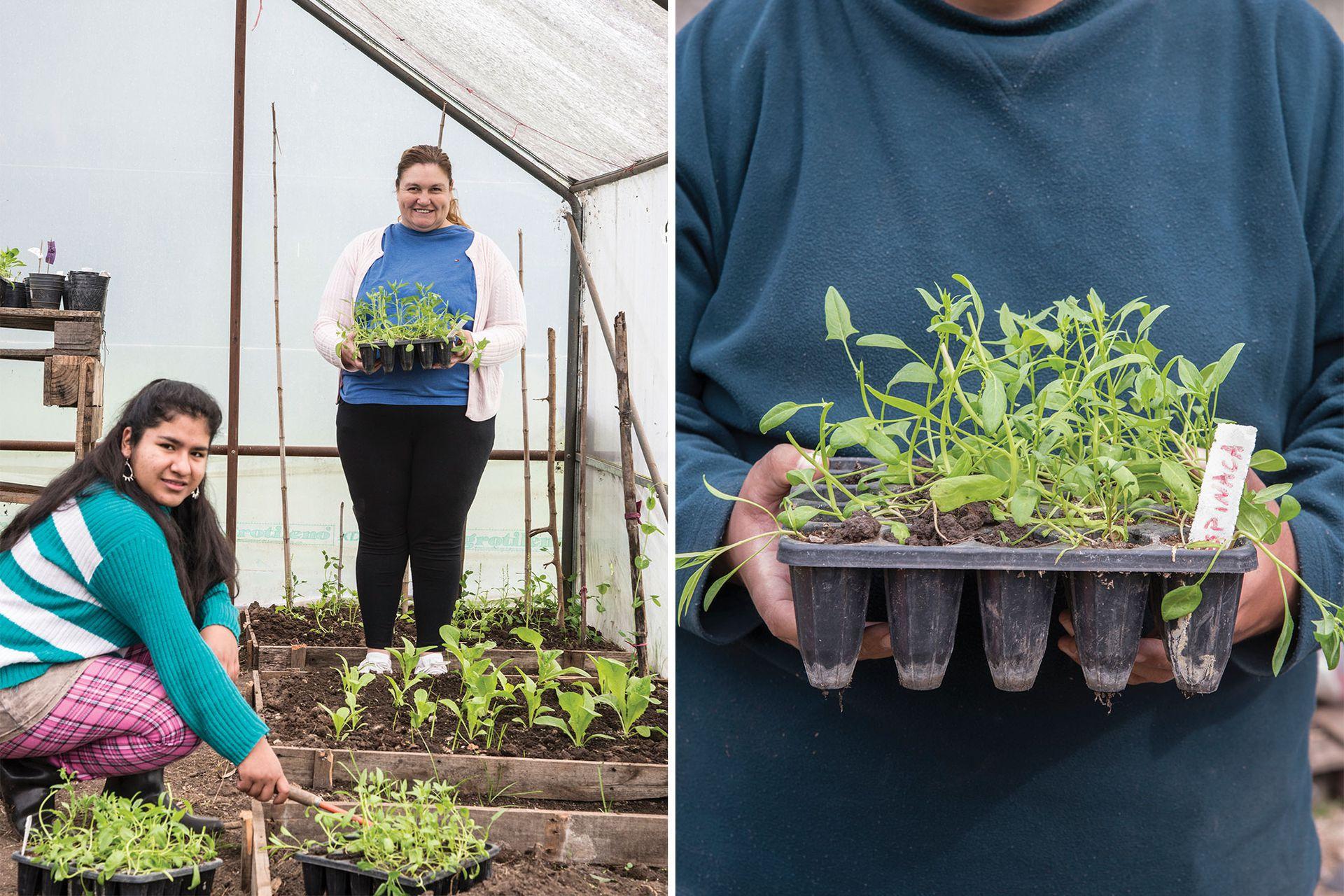 Celina y Verónica arreglan los plantines en el invernadero