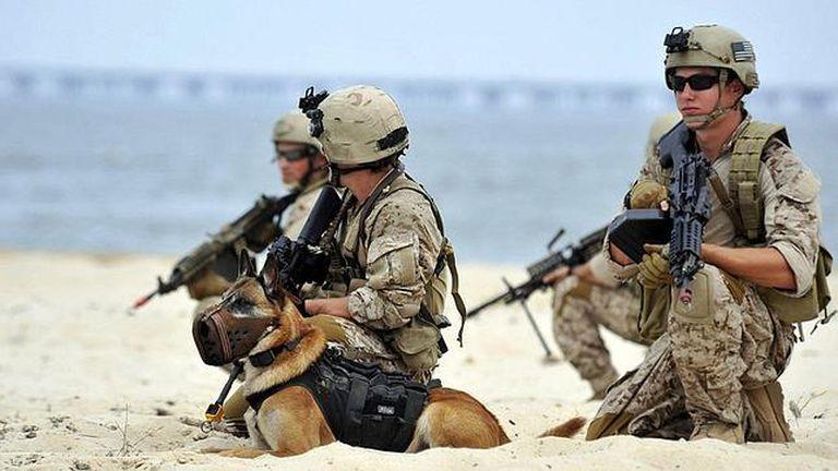 Los Navy Seals se reconvierten a 10 años de la épica captura de Ben Laden