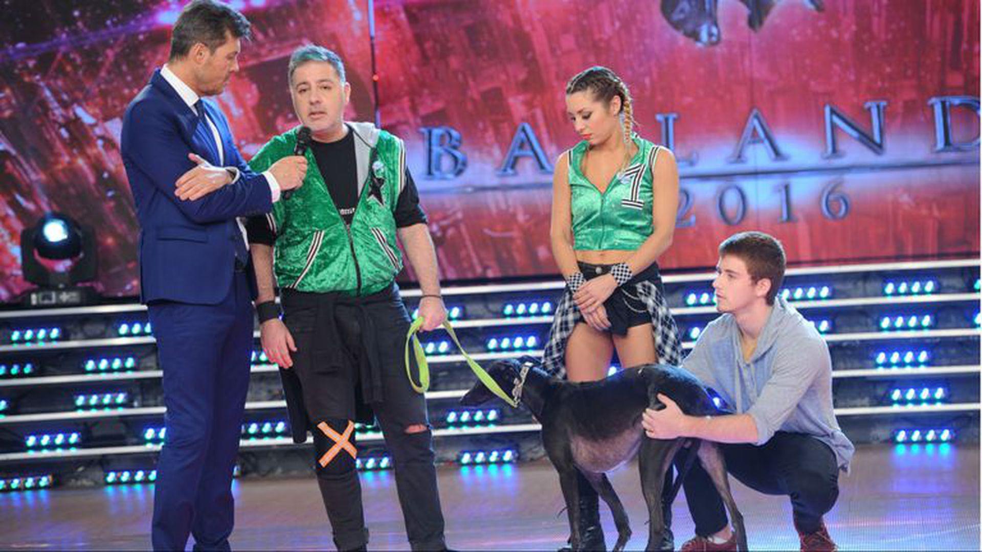 Durante su breve paso por el Bailando, Doman comenzó una cruzada en favor de los galgos reclamando la prohibición de las carreras de perros en el país.