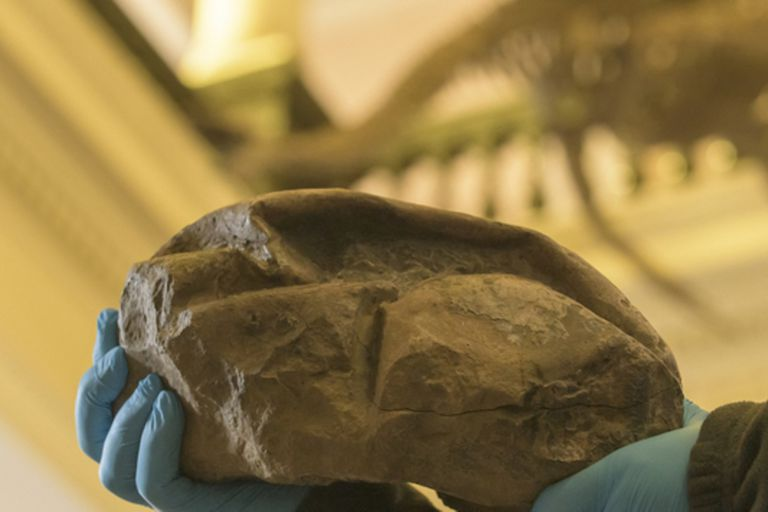 Antártida: un huevo descubierto podría ser de una lagartija marina extinta