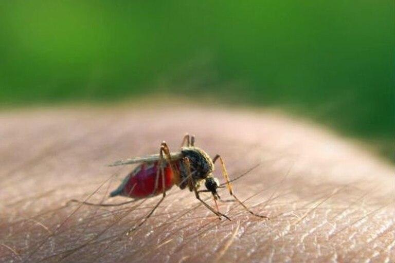 La malaria o paludismo está causada por un parásito que se transmite por la picadura de un mosquito infectado