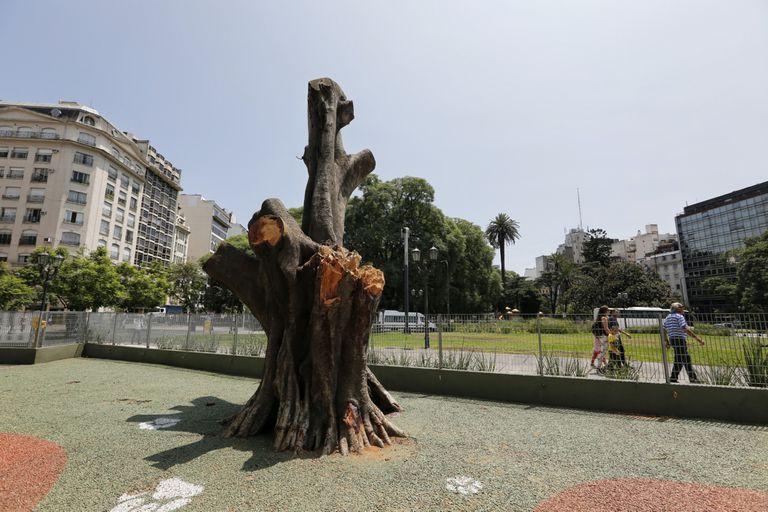 Podaron un gomero de más de 90 años en la Plaza Lavalle