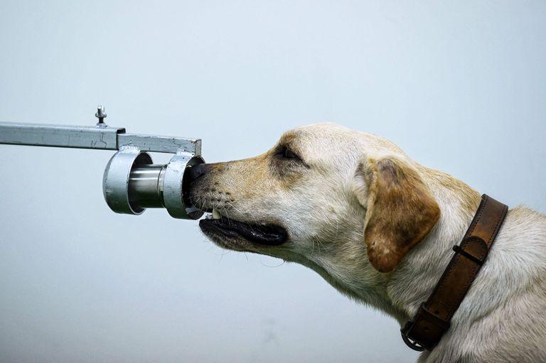 Los funcionarios involucrados en el estudio confirmaron que los participantes tenían entre 6 y 76 años y que los cuidadores de perros en el lugar no sabían qué muestras eran positivas