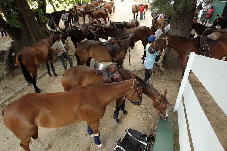 La Argentina es el primer exportador mundial de caballos de polo