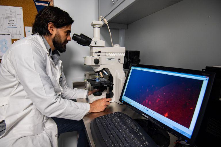 Conicet incorporará 820 nuevos cargos en la Carrera del Investigador Científico y Tecnológico