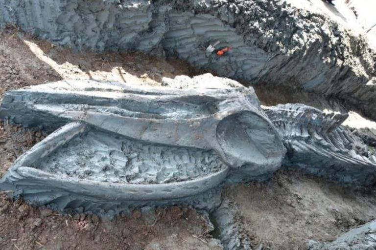 Hallan un esqueleto de ballena de más de 3000 años perfectamente conservado