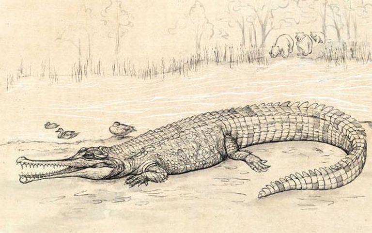 Se cree que fue el cocodrilo más grande que habitó Australia. Fuente: Eleanor Pease