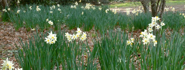 10 flores de primavera con perfumes maravillosos para tener en el jardín