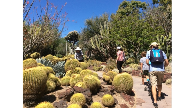 El espectacular jardín de cactus de Huntington cuenta con más de 5 mil especies