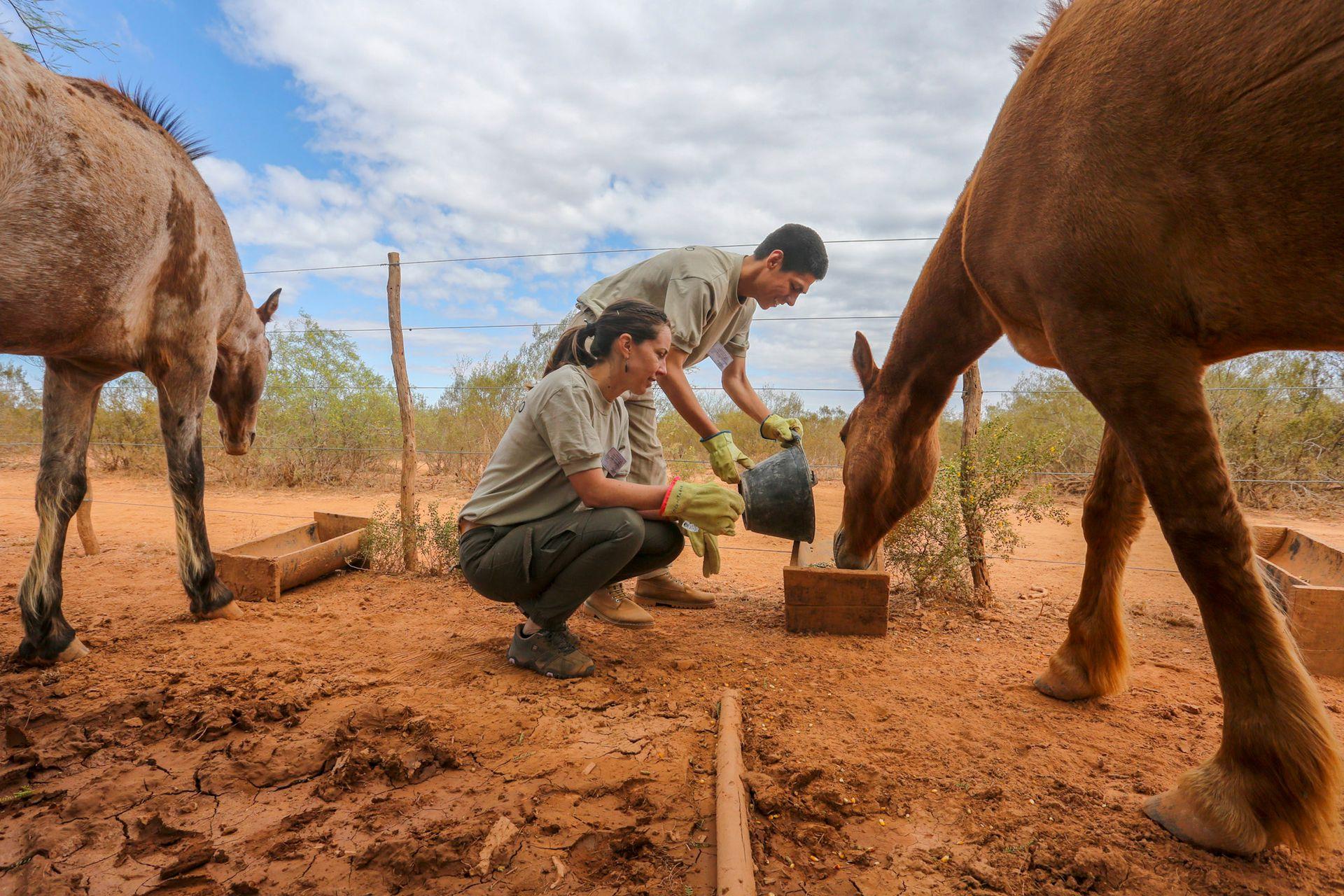 Una de las tareas de María Luz y Maximiliano es el cuidado de los equinos que usan los guardaparques para el relevamiento de diversas áreas dentro del Parque