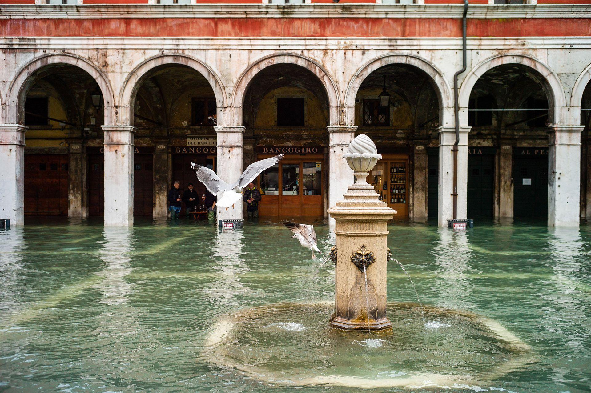 Sobre llovido, mojado. La fuente inundada y las palomas. Triste postal de la realidad veneciana.