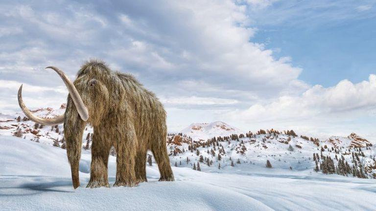 """Los científicos que quieren """"resucitar"""" mamuts para salvar el planeta"""