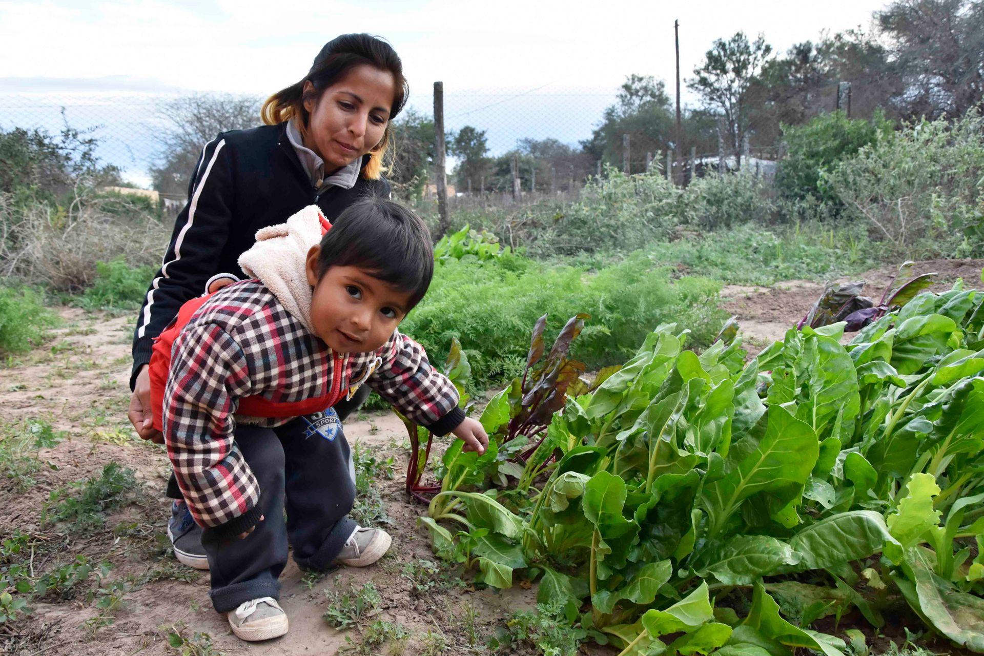 Otro de los proyectos que llevan adelante son las huertas comunitarias, ya se sumaron 154 familias