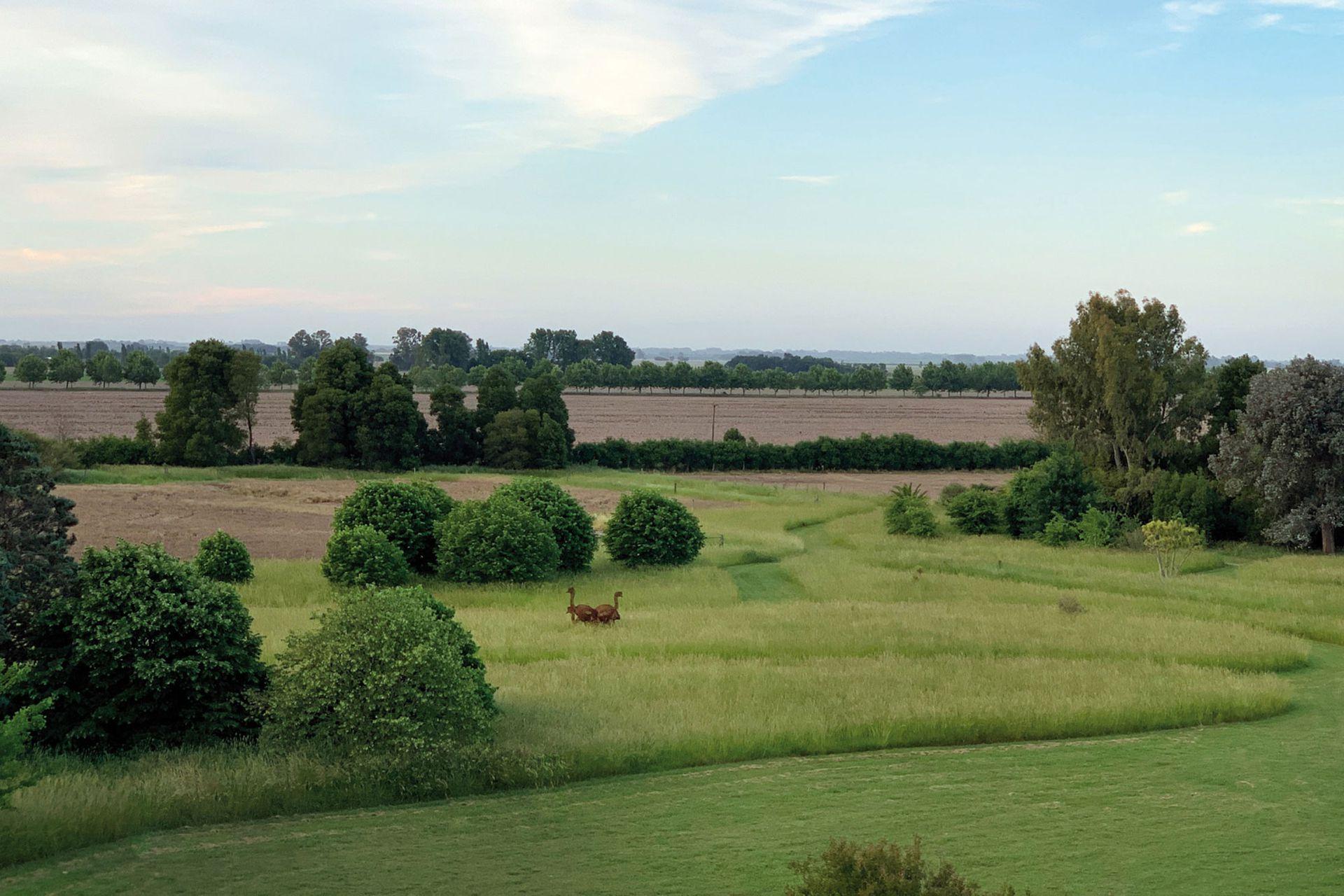 Vista de Bellatrix y su paisaje rural, donde se aprecian los caminos de césped entre las praderas naturales.