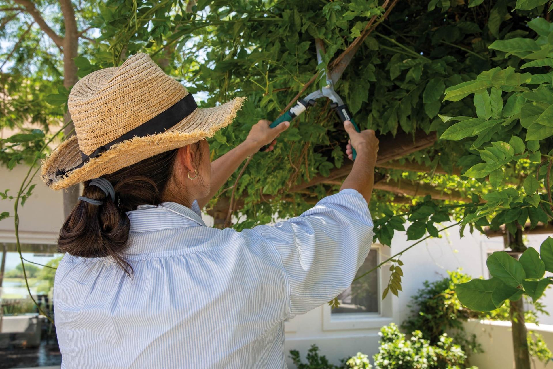 En verano es ideal podar ciertas especies de enredaderas, como la glicina.