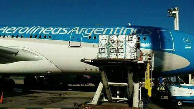 Los animales del zoológico Colon fueron transportados en un avión de Aerolíneas Argentinas