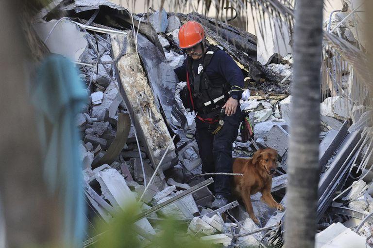 Un rescatista trabaja en la zona del derrumbe con un perro rastreador