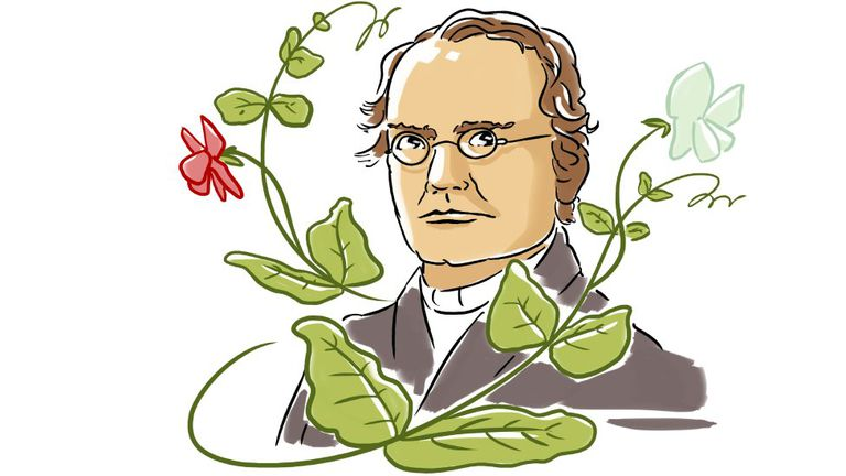 Mendel reveló las leyes estadísticas de la herencia y postuló la existencia de una unidad de la herencia que ahora se llama gen