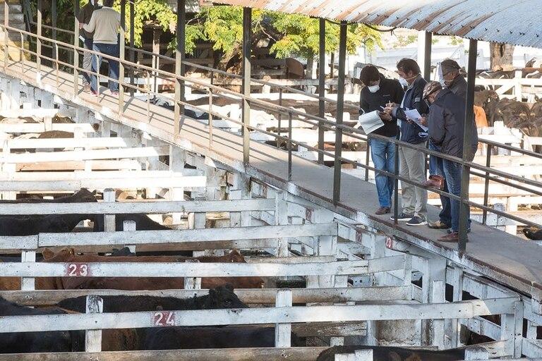 El Mercado de Hacienda de Liniers.