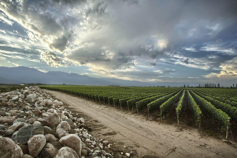 Guía malbec.  Los caminos del vino en Mendoza