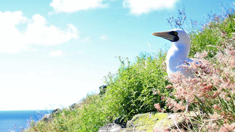 Redonda es la tercera y menos conocida de las islas de Antigua y Barbuda: poco tiempo atrás era un terreno desierto y hoy es un paraíso ecológico fértil