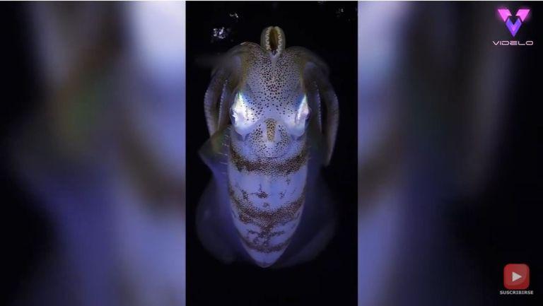 El fotógrafo Marcelo Johan Ogata captura en imágenes algunas de las criaturas más increíbles del mundo submarino