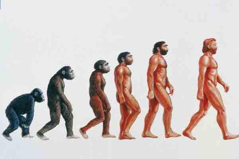 La creatividad habría tenido una participación estelar en la evolución humana