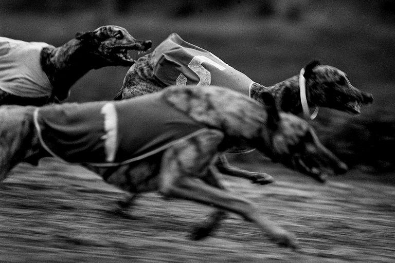 LA NACION en BAphoto: las mejores imágenes que se podrán disfrutar en la muestra