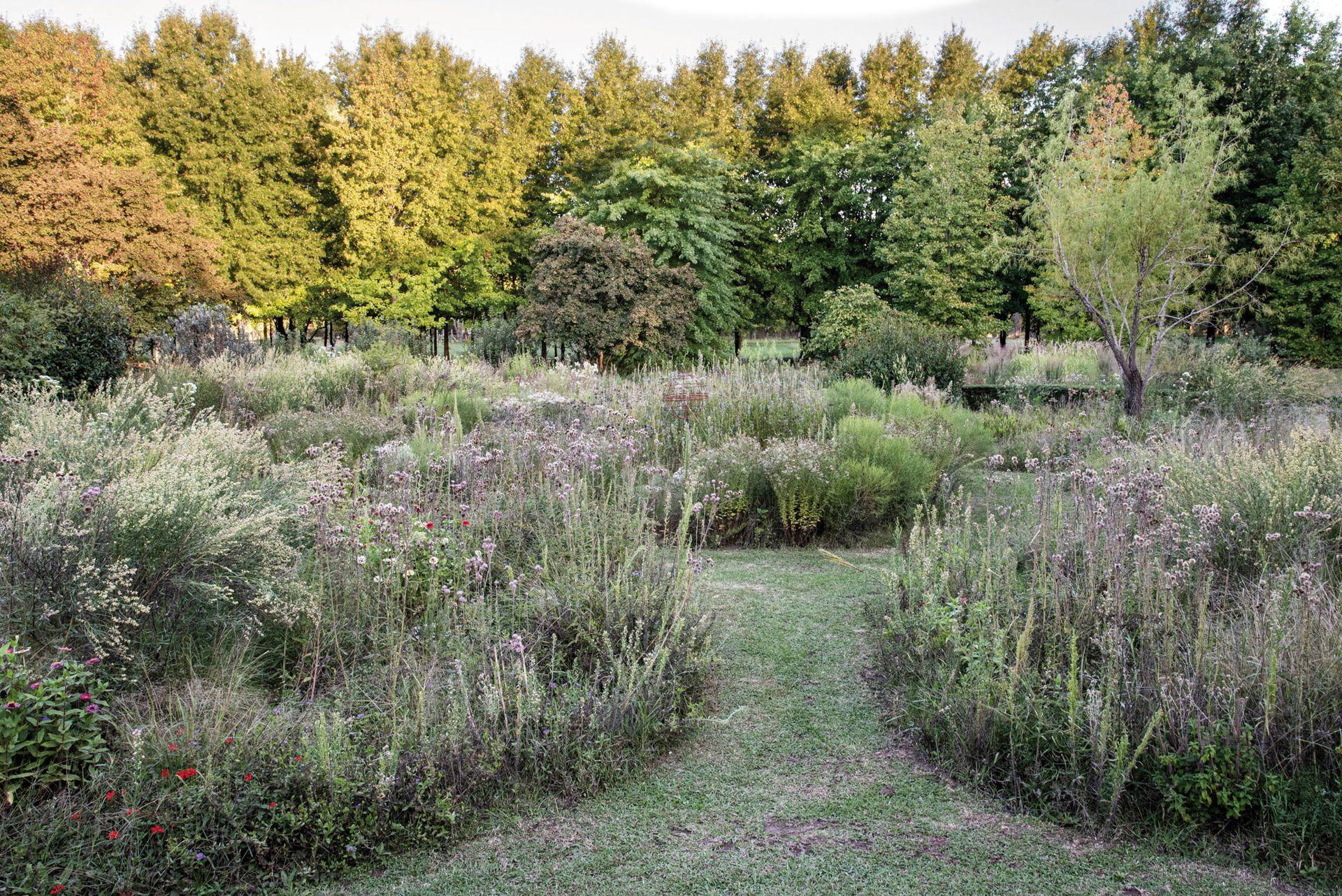 Pastizal experimental de herbáceas y gramíneas nativas que se va desarrollando año a año a través de la autorresiembra. Se observan Campuloclinium macrocephalum, Achyrocline satureioides y Eupatorium subhastatum, entre otros.