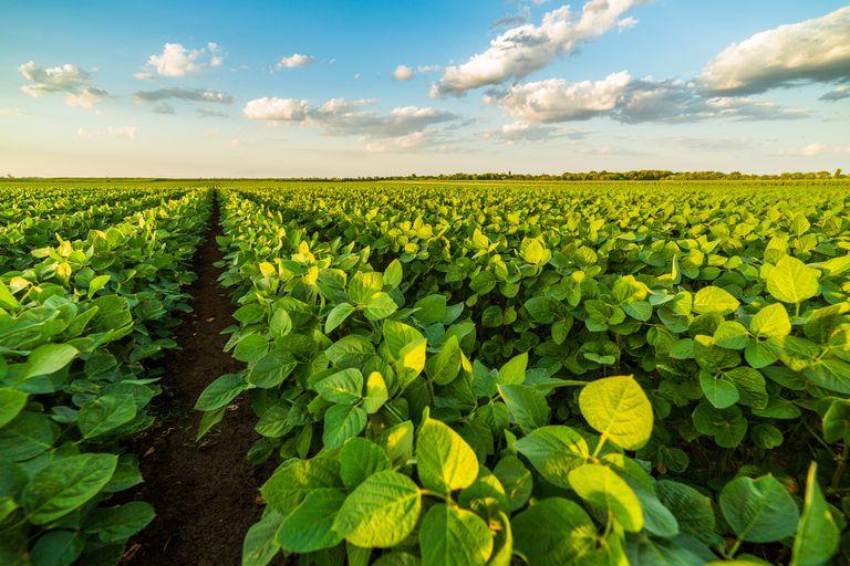 Sustentabilidad: renuevan un acuerdo entre una plataforma y un semillero