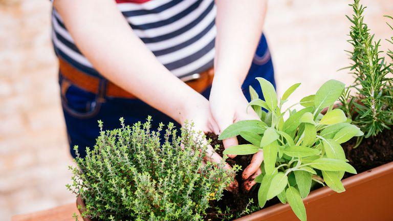 ¿Cuándo es el mejor momento para podar y para plantar?