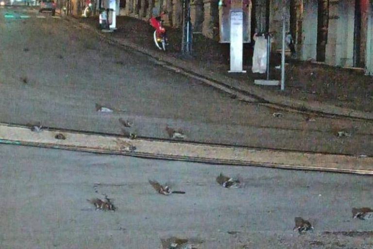 """Los ambientalistas explican que, a causa del pavor que les provocaron los fuegos artificiales, los pájaros pudieron """"morir de miedo"""", """"por golpear contra ventanas"""" o, incluso """"de infartos"""""""