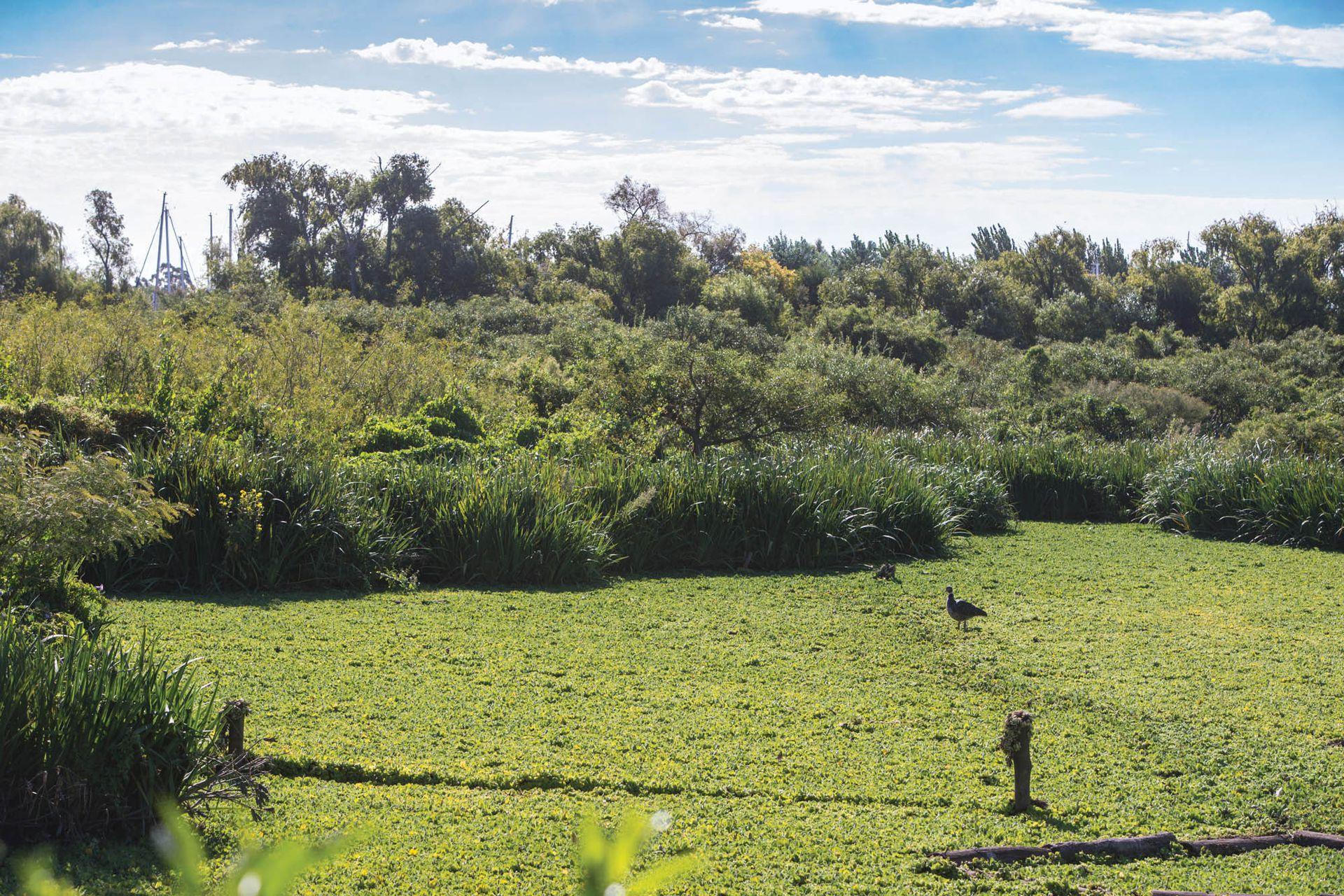 La Reserva Natural Ribera Norte es un paseo en sí mismo, con el plus de que contiene un vivero de especies del nordeste bonaerense.