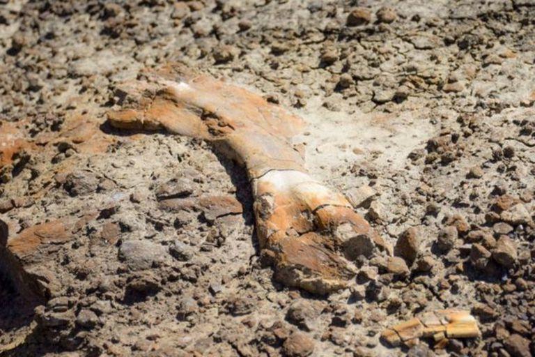 El niño subió a lo alto de una colina rocosa y encontró lo que parecía ser (y era) parte de un hueso fosilizado de un dinosaurio