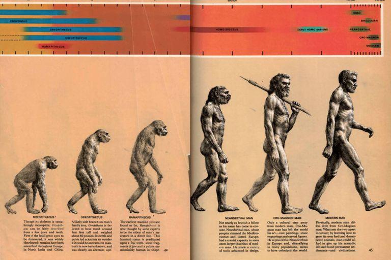 """Una versión abreviada de la ilustración conocida como """"el camino del Homo sapiens"""", publicada originalmente en el libro Early Man, del año 1965"""