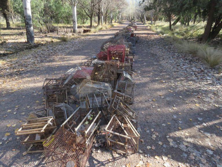 En fila. Más de 4.000 tramperos y jaulas fueron destruidos en un centro de conservación y rescate de fauna silvestre en Mendoza.