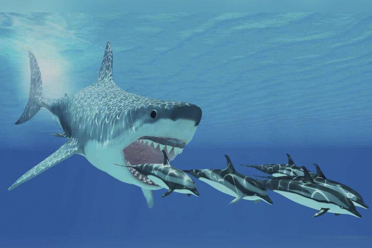 Los restos de tiburones hallados eran del mismo linaje del megalodón, que figura en esta ilustración