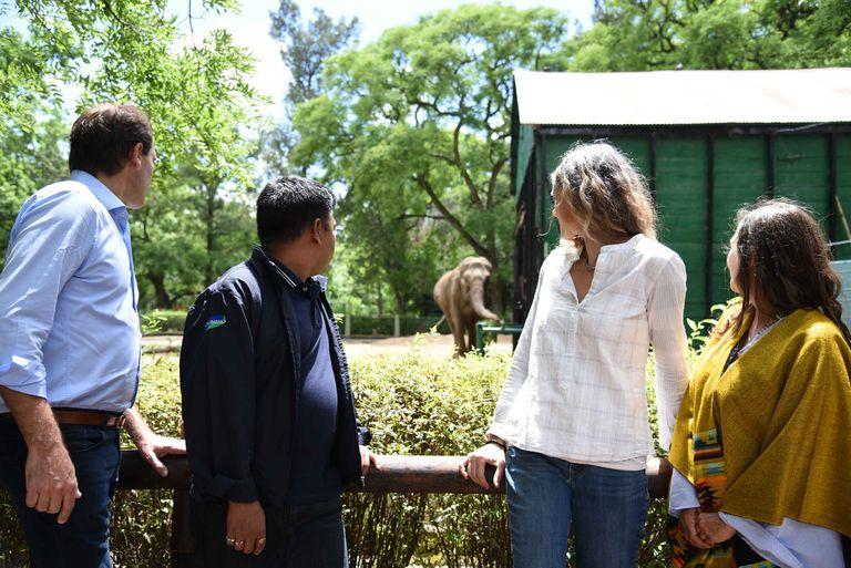 La elefanta Pelusa lucha por su vida en el zoo de La Plata