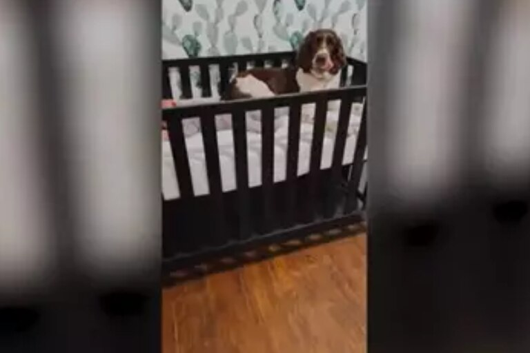 Capturan en vídeo la conmovedora reacción de este perro cuando escucha a un bebé llorando en su cuna