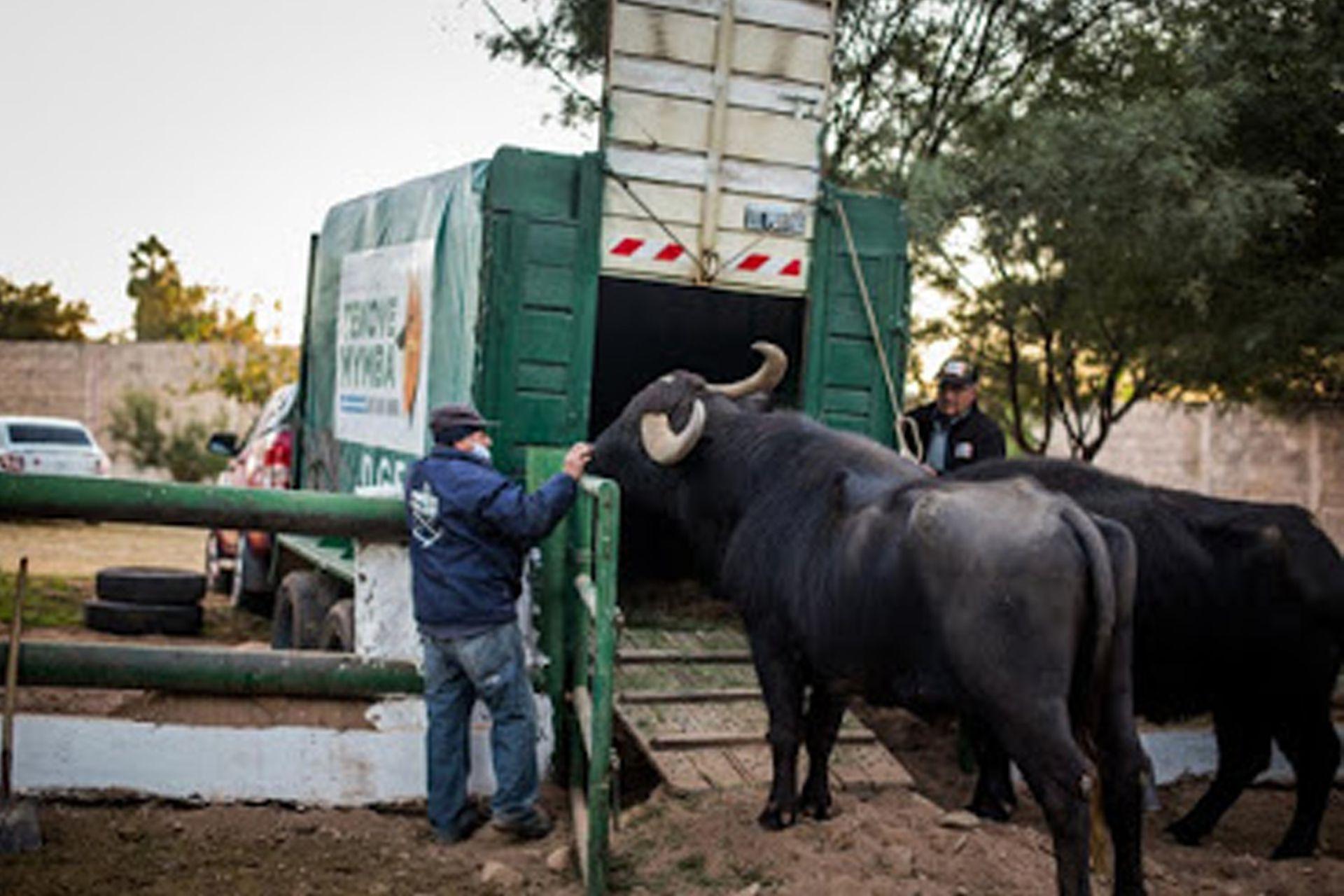 Felipe y Gigante por subir al vehículo que los trasladó desde La Rioja hasta Entre Ríos.