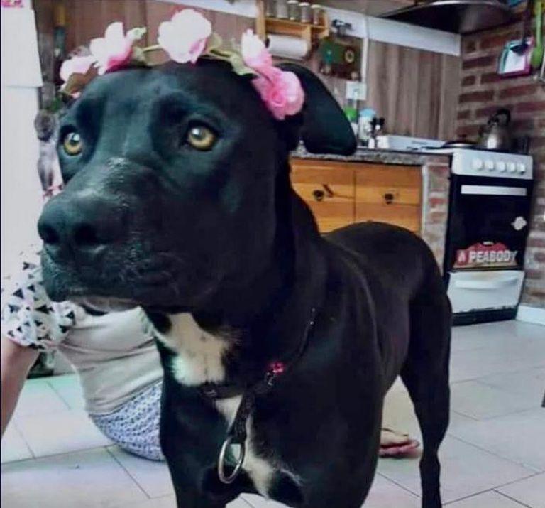 La perra tita que fue asesinada por el Policía Elias Saavedra, quien le disparó con su arma de fuego reglamentaria