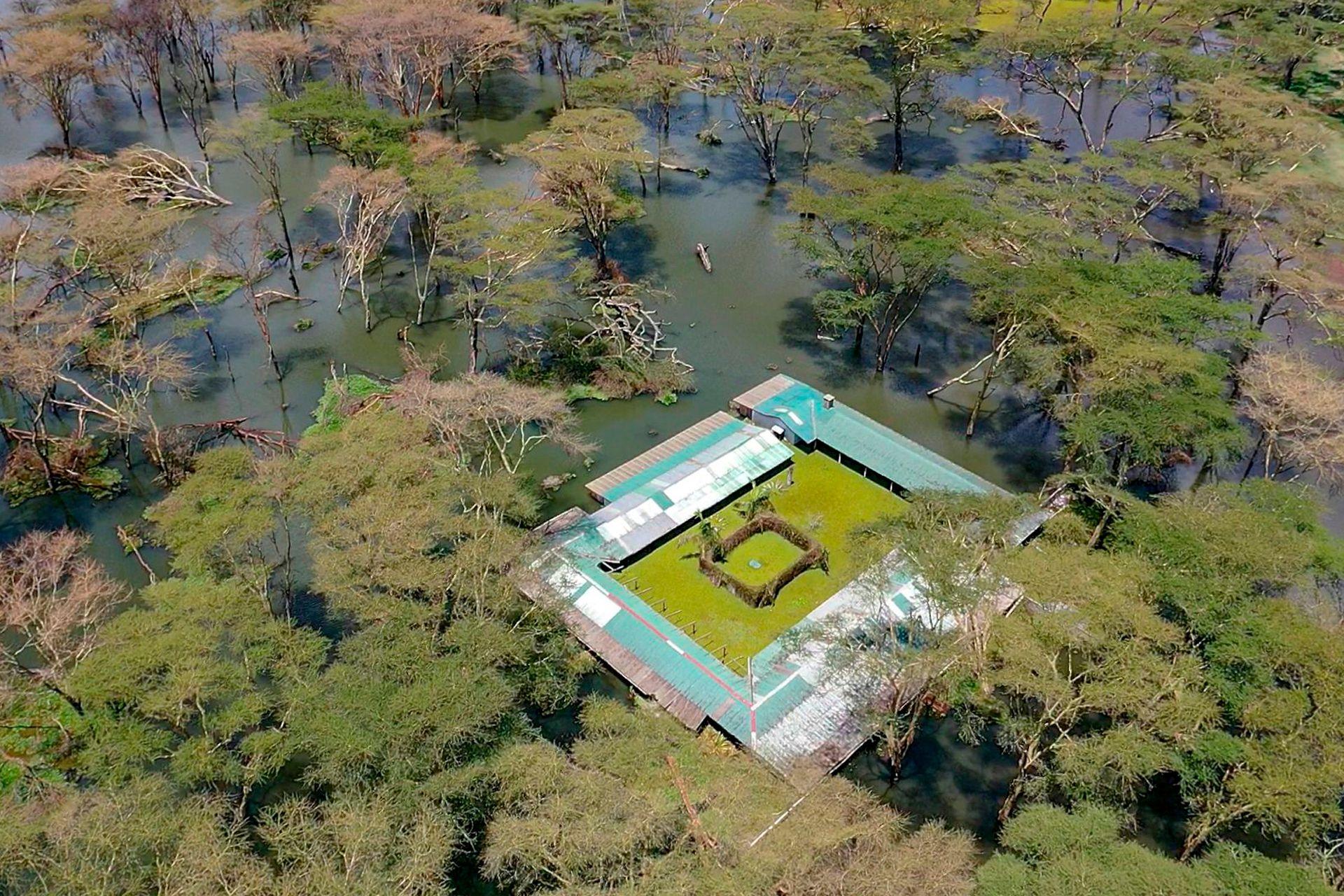 El jefe del pueblo apenas logra encontrar la granja donde ha pasado toda su vida, sumergida por las aguas del lago Baringo, en Kenia, tapizado de jacintos acuáticos