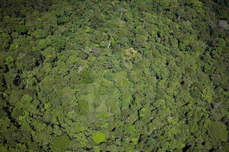 El bosque amazónico contribuye a que lleguen lluvias a miles de kilómetros de distancia