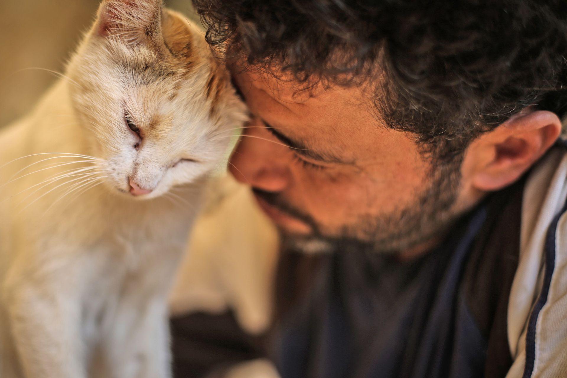 Los gatos reciben cariños y contención